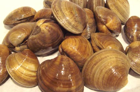 The innocent looking clams.